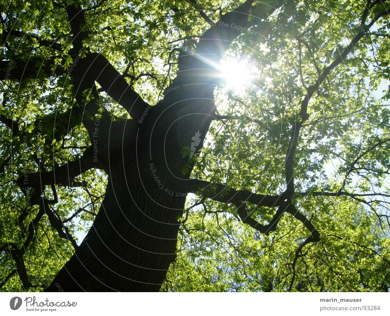 ray of hope Tree Sunbeam Calm Spring Nature Bright spot Happy Trip Relaxation
