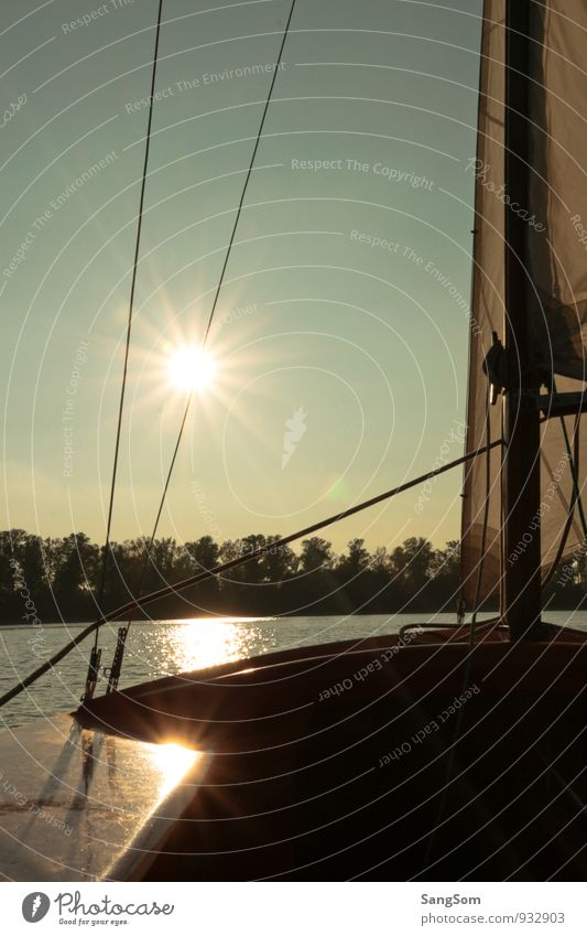 Sailing with Kalli Leisure and hobbies Summer Sun Nature Water Sky Cloudless sky Sunlight Spring Autumn Beautiful weather Tree Lakeside River bank Sailboat