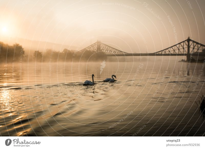 Sunrise at the Elbe with pair of swans and bridge Nature Landscape Water Sunset Autumn Winter Fog River bank Town Deserted Manmade structures Architecture