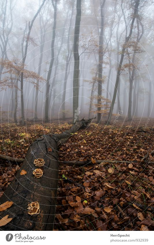 Nature Old Tree Landscape Calm Forest Environment Autumn Natural Gray Exceptional Brown Fog Esthetic Tree trunk Creepy