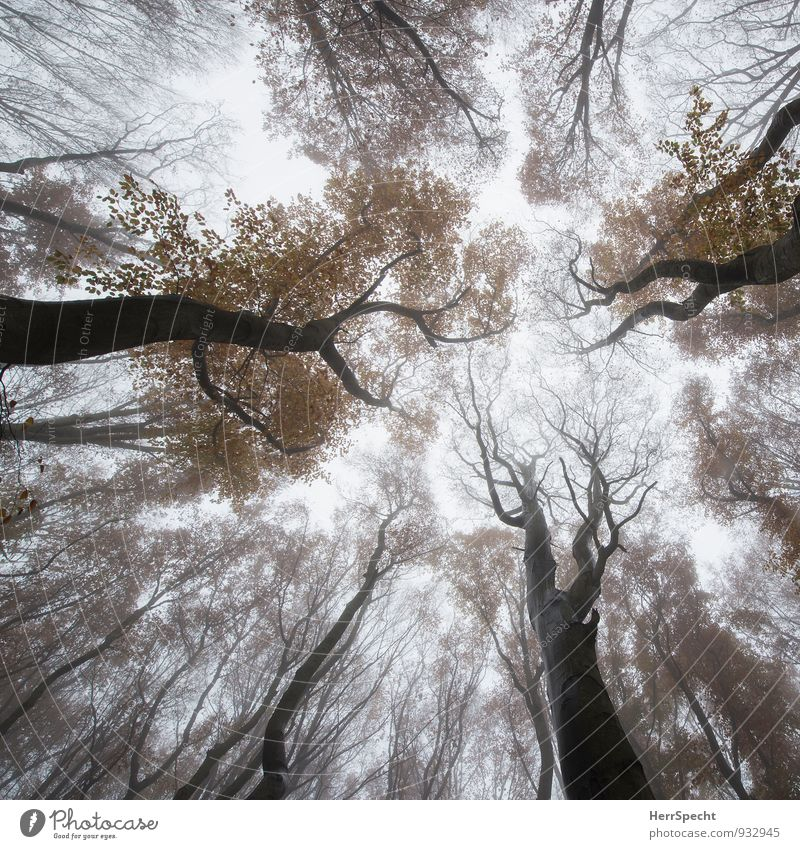mushroom perspective Environment Nature Sky Autumn Fog Tree Forest Vienna Austria Esthetic Exceptional Threat Natural Brown Gray Viennese Forest Deciduous tree