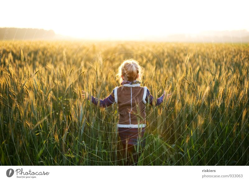 shining days Human being Feminine Child Girl Infancy 1 3 - 8 years Environment Nature Sunlight Autumn Beautiful weather Fog Field Touch Discover Relaxation