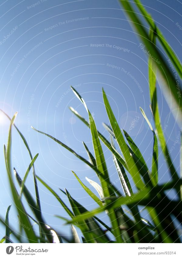 Nature Beautiful Sky Sun Green Plant Summer Meadow Grass Warmth Lighting Growth Pure Natural Macro (Extreme close-up) Blade of grass