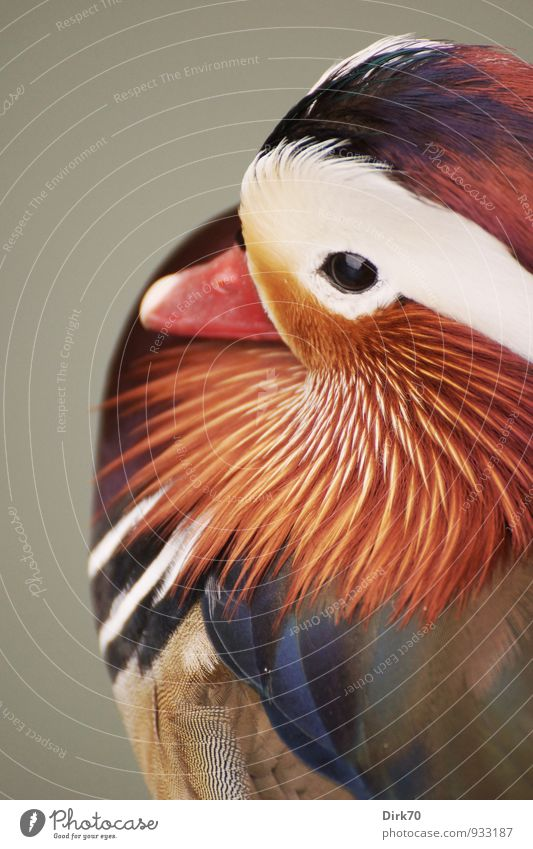 Nature Blue Beautiful Colour White Red Animal Black Gray Brown Bird Park Orange Elegant Wild animal Feather