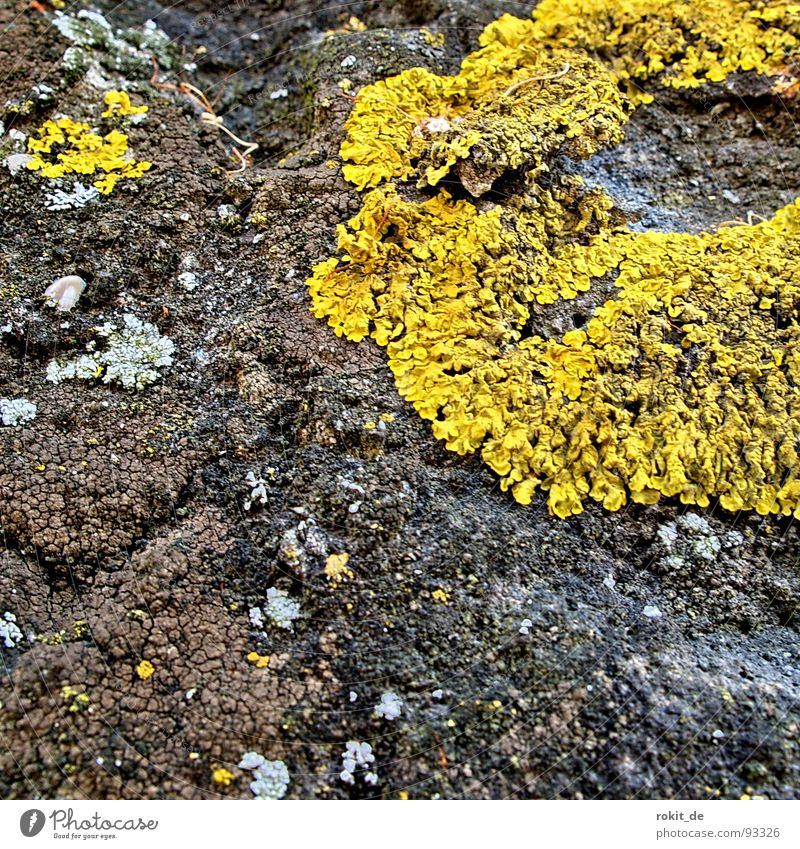 Yellow Wall (barrier) Fear Growth Derelict Mushroom To feed Panic Crawl Extraterrestrial being Lichen Creep Recite