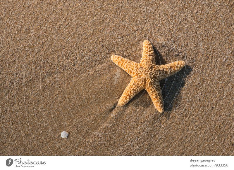 Starfish into the waves Relaxation Vacation & Travel Tourism Summer Beach Ocean Island Waves Nature Landscape Sand Coast Natural White water star Tropical