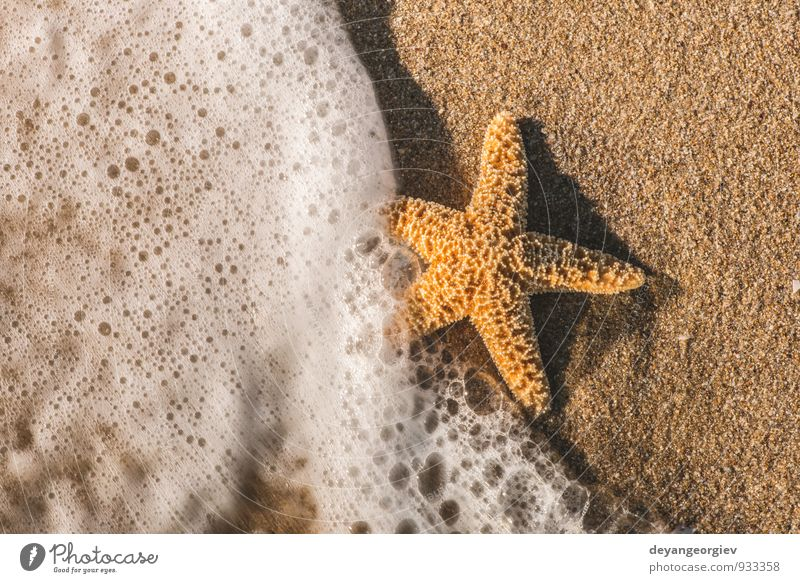 Starfish into the waves Nature Vacation & Travel White Summer Relaxation Ocean Landscape Beach Coast Natural Sand Waves Tourism Island Seasons