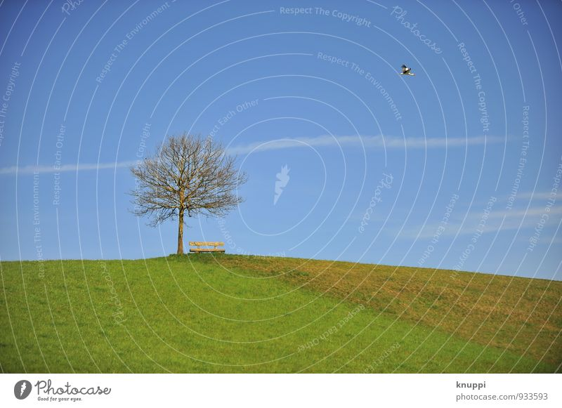Sky Nature Blue Green Summer White Sun Tree Landscape Clouds Animal Environment Autumn Meadow Grass Flying