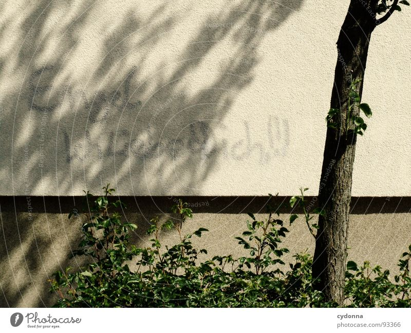 Tree City House (Residential Structure) Wall (building) Emotions Graffiti Building Characters Communicate Desire Reading Write Information Public Daub Meaning