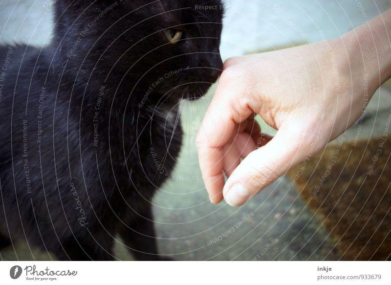 Cat Hand Calm Animal Emotions Friendship Together Communicate Curiosity Trust Odor Pet Considerate Interest Caution Senses