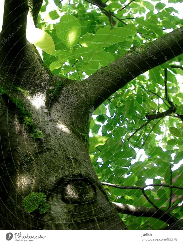 Green Tree Plant Sun Summer Leaf Eyes Forest Spring Warmth Brown Dangerous Physics Branch Observe Tree trunk