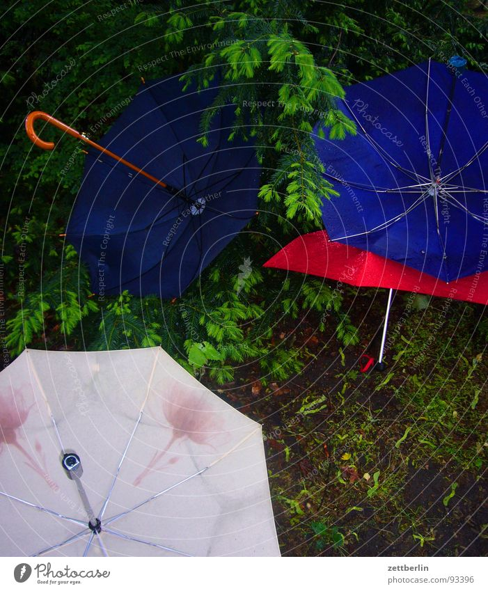 rain Umbrella Rain Bad weather Meteorological service Low pressure zone Rain wear Rain jacket Weather protection Forest Enchanted forest Berlin zoo