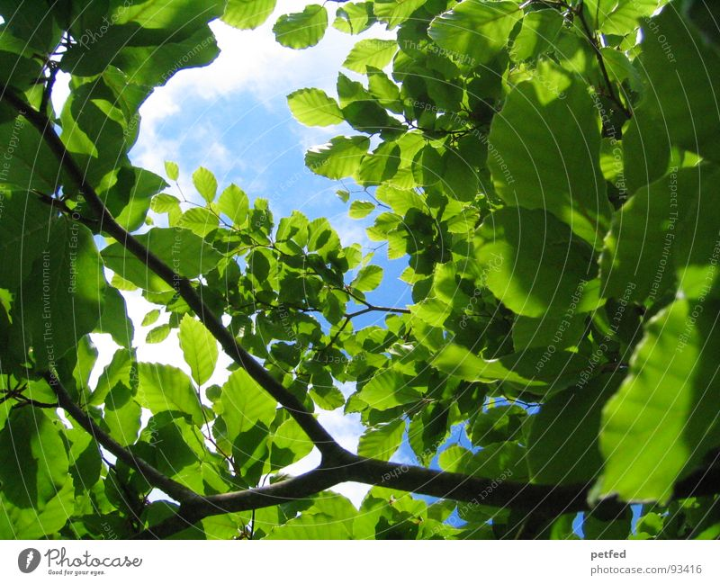 Nature Green Blue Summer Vacation & Travel Leaf Freedom Environment Multiple Branch Many