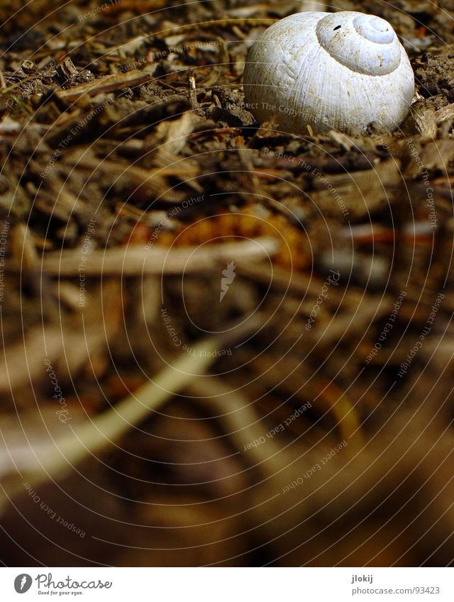 Vacation & Travel White Leaf Eyes Nutrition Earth Floor covering Americas Spiral Snail Bowl Crawl Feeler Slowly Mollusk Snail shell