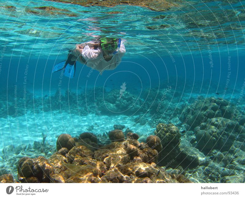 Water Ocean Dive Maldives Reef Snorkeling Underwater photo