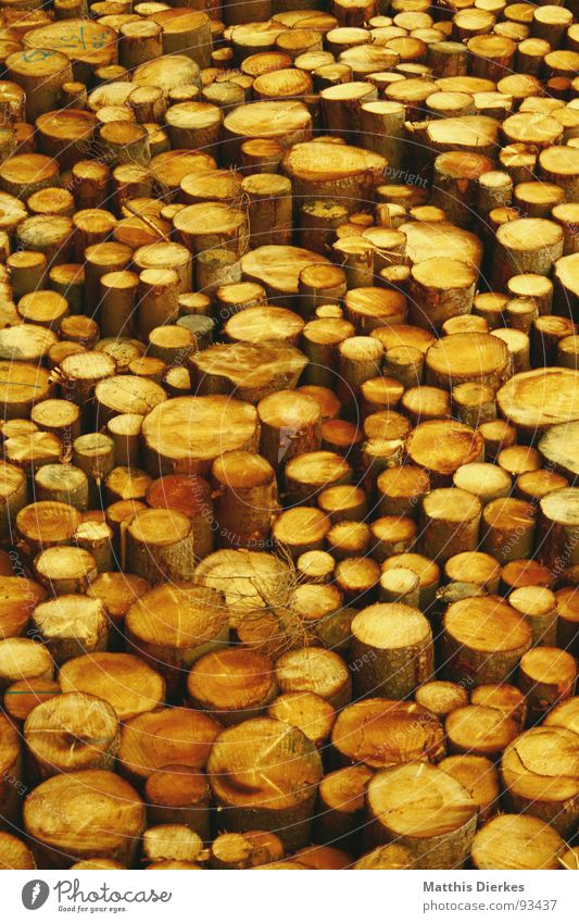wood Nature Tree Wood Yellow Heap Stack Stack of wood Tree trunk Logging Structures and shapes Contrast Background picture Tree felling Raw Maximum Woody lumber