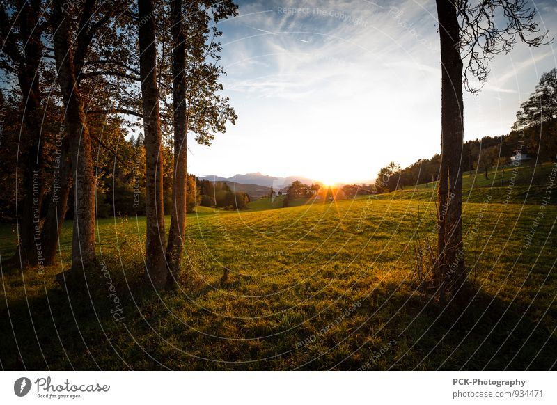 Before Sunset Environment Nature Landscape Sky Sunrise Sunlight Autumn Park Meadow Field Moody Sunbeam Mood lighting autumn mood Seasons Colour photo