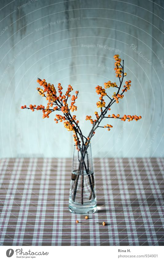 AutumnStill Esthetic Brown Orange Still Life Ilex glass vase Checkered Autumnal Berries Interior shot Deserted Copy Space top Shallow depth of field
