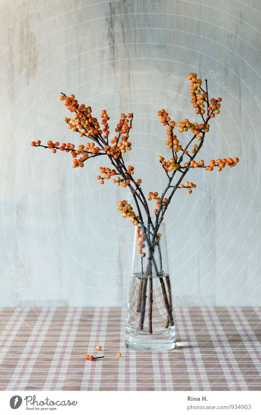 AutumnStill II Brown Orange Still Life Vase Ilex Berry seed head Tablecloth Colour photo Deserted Copy Space top Copy Space bottom Shallow depth of field
