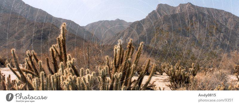 Water Mountain Sand Large Desert Thin Panorama (Format) Cactus Valley California