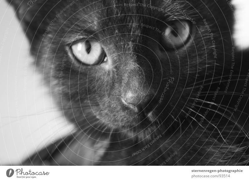 Animal Cat Mammal Domestic cat Cat eyes