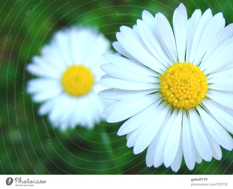 Nature Flower Green Summer Yellow Meadow Blossom Garden Lawn Blossoming Daisy Pollen Macro (Extreme close-up)