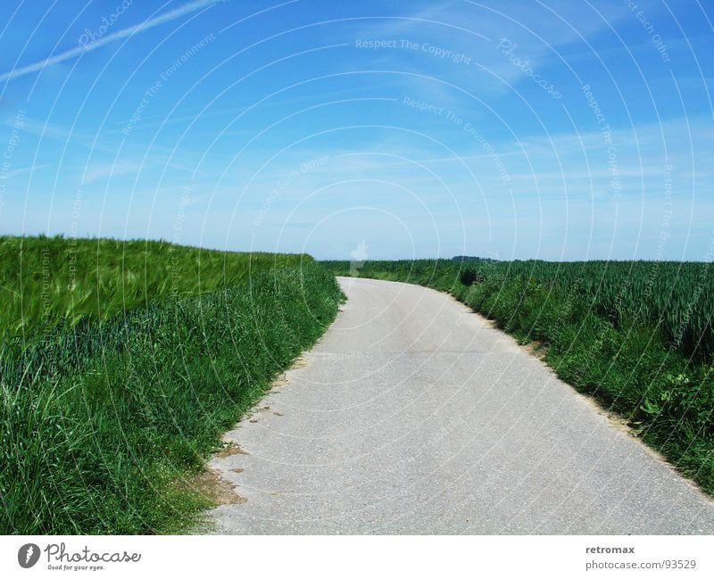 now go to the left Field Green Juicy Barley Asphalt Relaxation Wanderlust Exterior shot Spring Meadow Footpath Idyll Horizon Hill Wayside Turn off Left Calm