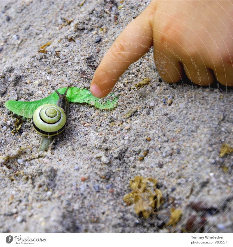 impression Playing Leisure and hobbies Child Sandpit Childhood dream Task Planning Summer Spring Suck-up Feeler Snail shell Detached house Hand Children`s hand