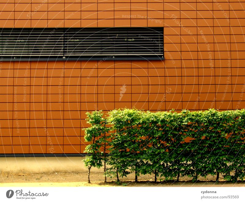 orange Rectangle Hedge Wall (building) Window Minimalistic Green Town Style Architecture Modern Detail Line New Orange Corner Perspective Mask