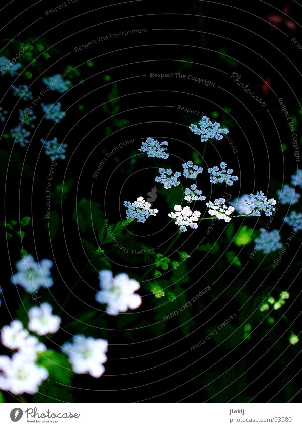 Nature White Green Plant Dark Meadow Blossom Growth Star (Symbol) Blossoming Faded