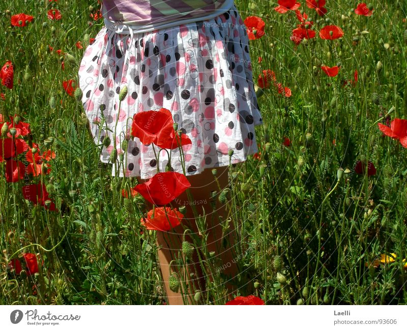 poppy seed skirt White Pink Black Poppy Red Blossom Beautiful Blossoming Grass Green Juicy Field Happiness Spring Flower Joy Garden Nature