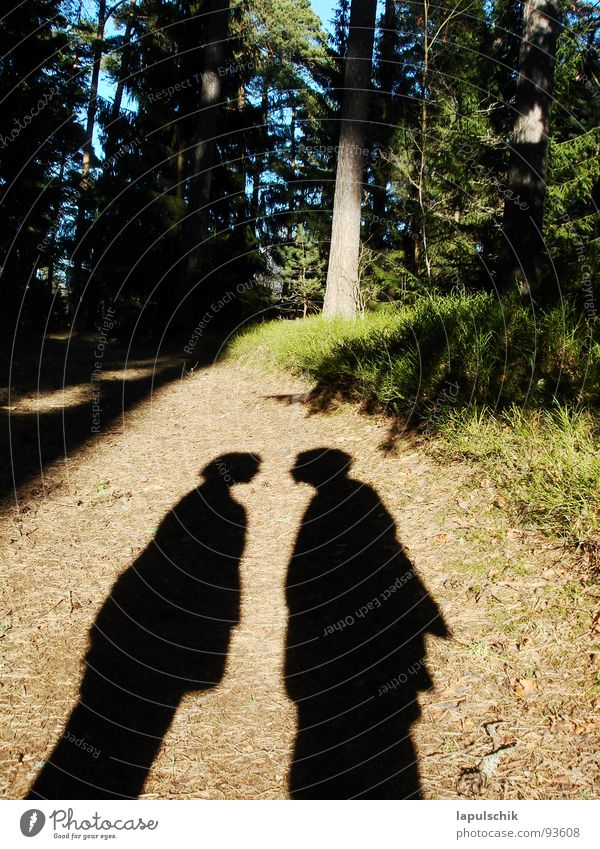 fluffier Forest Estonia Green Spruce Physics Mysterious Exterior shot Love Spring frueling Couple people Shadow discussion Warmth Nature In pairs Lovers