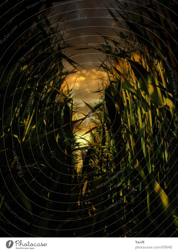 Green Red Yellow Dark Grass Brown Orange Field Transience Tunnel Common Reed Footpath Blade of grass Escape Go under Wheat
