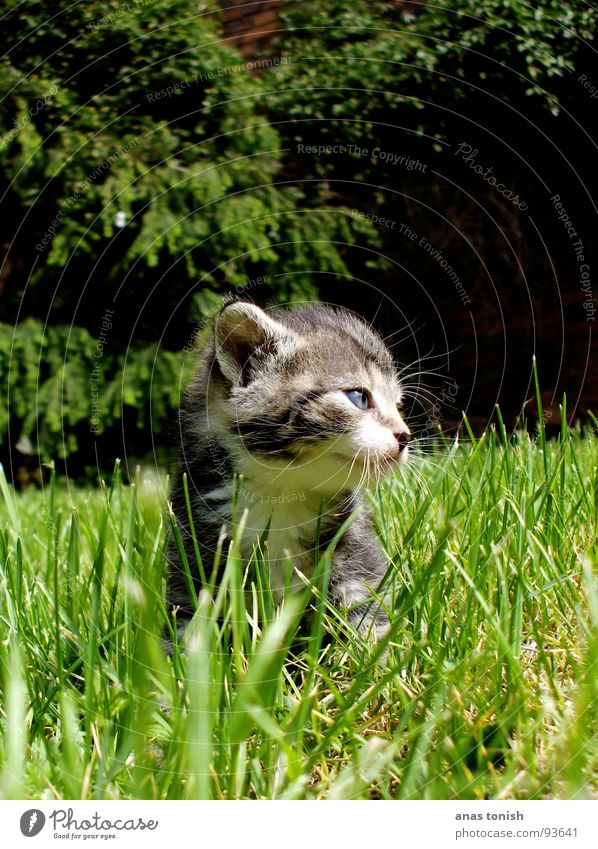 kitty cat Loneliness Grass Blade of grass Pet Cat Small Meow Cute Playing Sweet Paw Pelt Claw Snout Mammal Garden blow one's nose