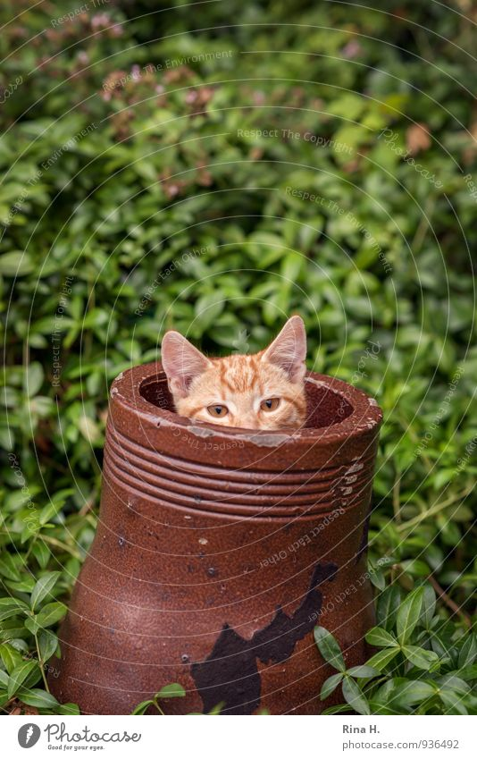 cornerstone Garden Cat 1 Animal Baby animal Playing Curiosity Cute Brown Green Hide Pipe Colour photo Exterior shot Shallow depth of field Animal portrait