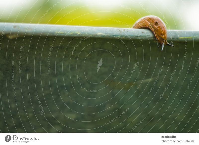 schnegge Garden garden pest Snail Mollusk Slug Plagues snail plague Garden plot Pests Destructive weed wallroth Crawl Curiosity Corner Copy Space Wheelbarrow