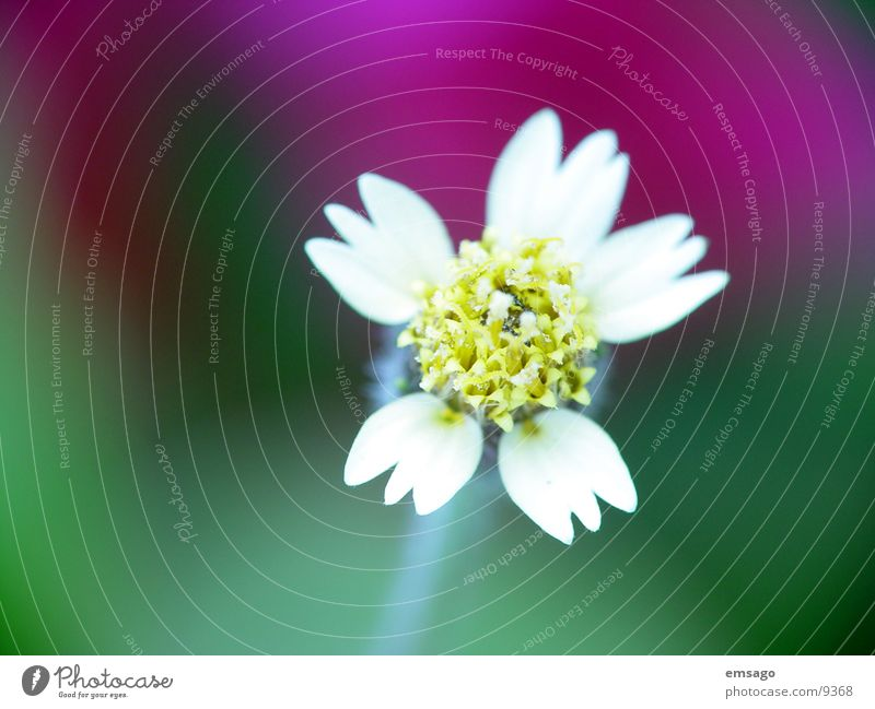 just cute Flower Close-up Blur Detail amaise Nature close up