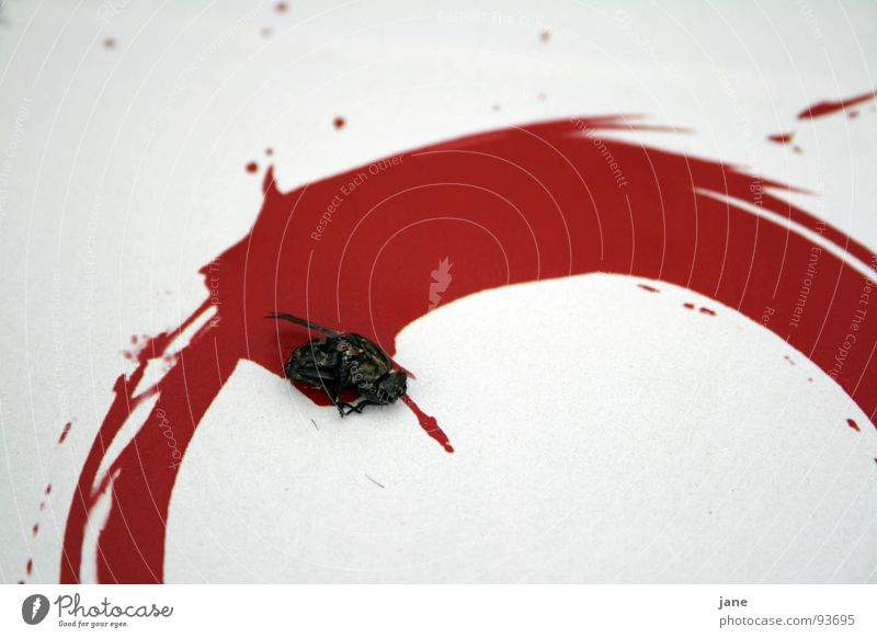 Flatsch almost mud Red Painting and drawing (object) Inject Animal Insect Grief Distress Fly Death Blood Drawing Circle spritzer