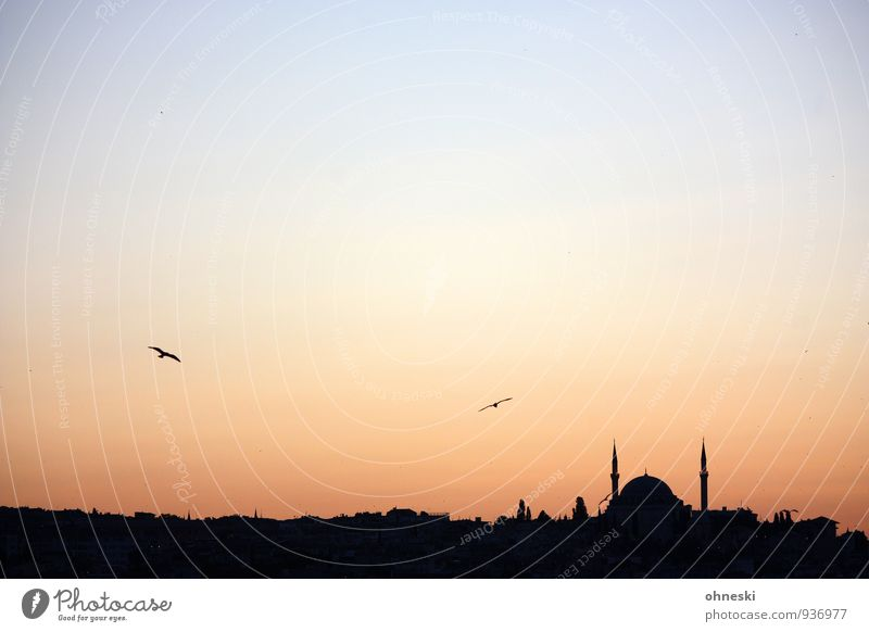 Orient Istanbul Turkey Town Manmade structures Building Architecture Mosque Bird Horizon Vacation & Travel Religion and faith Far-off places Islam Colour photo