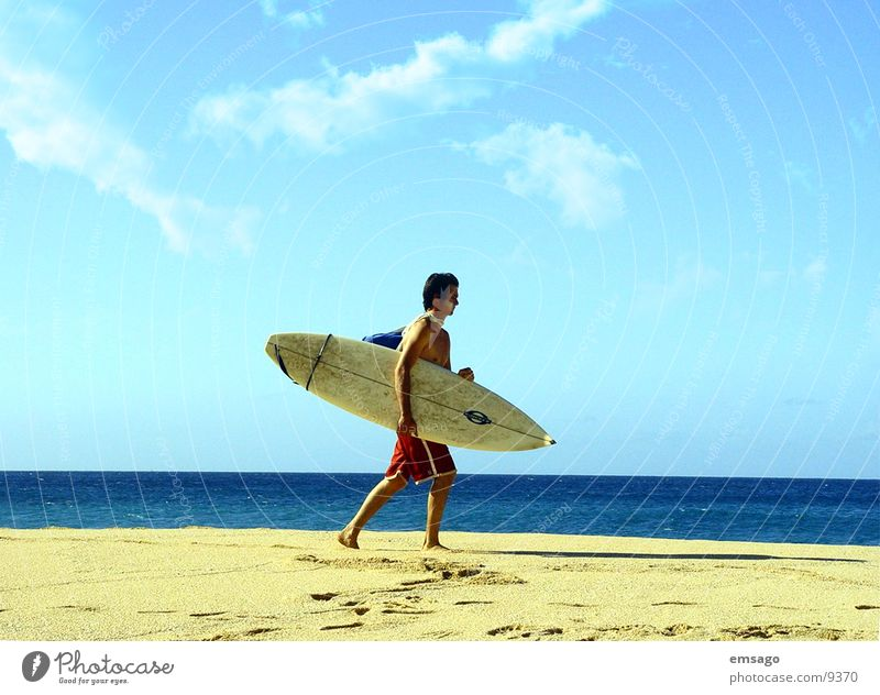 surfer Surfer Horizon Beach Ocean Hawaii Surfing Surfboard Extreme sports Sky