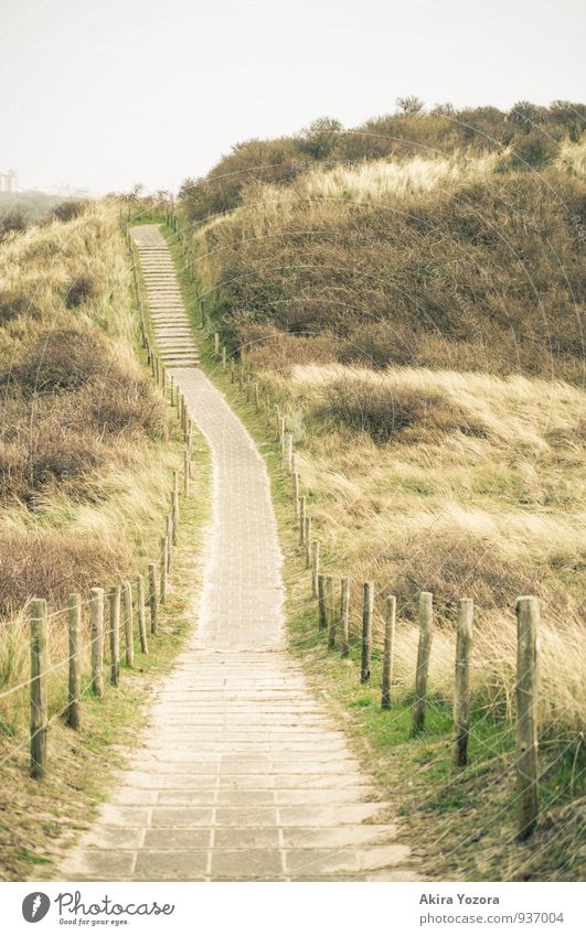 Sky Nature Vacation & Travel Green Landscape Yellow Grass Lanes & trails Gray Going Brown Idyll Bushes Hiking Walking Fence