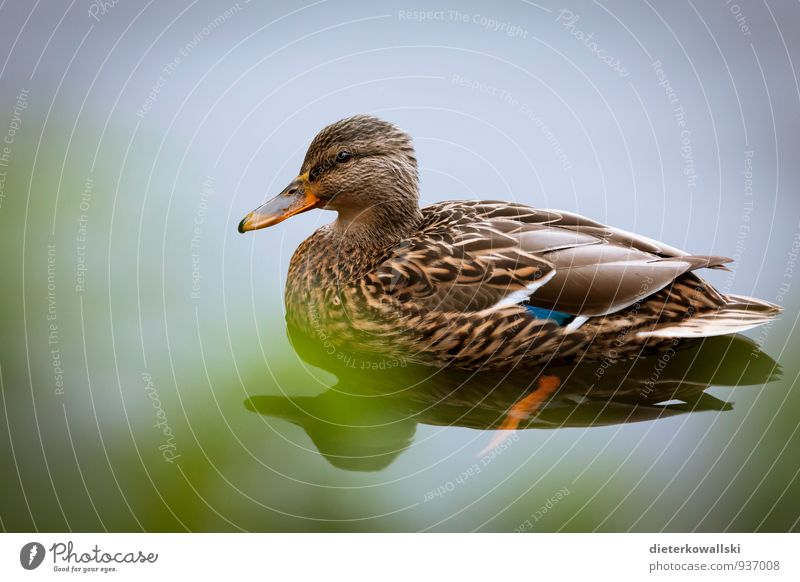 Nature Calm Animal Environment Bird Wing Observe