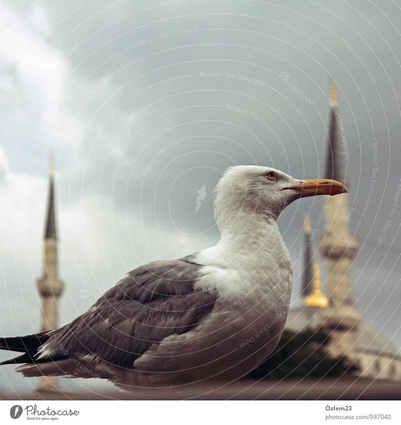 Seagull II Animal 1 Sign Virtuous Cool (slang) Optimism Honest Authentic Wisdom Purity Modest Contentment Nostalgia Arrangement Vacation & Travel