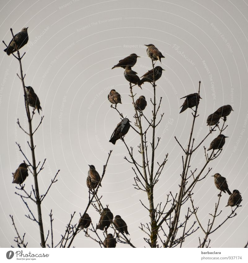 Sky Nature Plant Tree Animal Environment Autumn Bird Together Bushes Sit Climate Group of animals Change Many Attachment