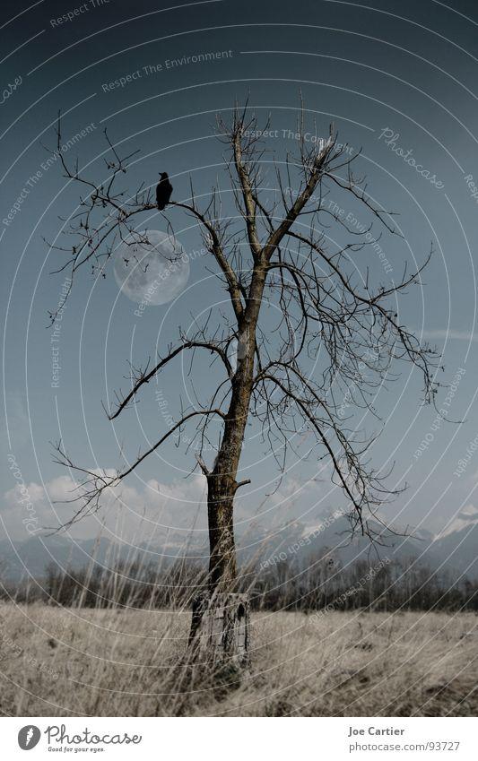 moonlight Dark Mystic Tree Field Raven birds Moon Loneliness Sadness