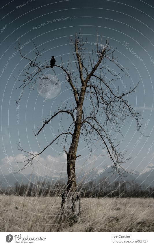 Tree Loneliness Dark Sadness Field Moon Mystic Raven birds