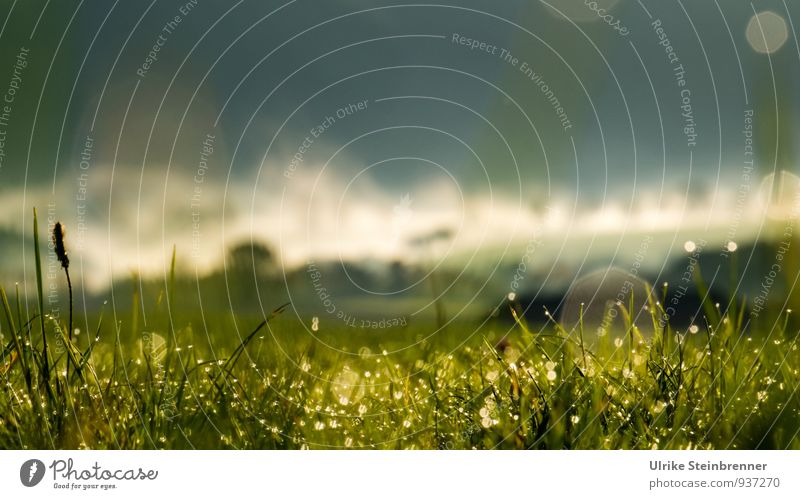 Fog Rolls 7 Environment Nature Landscape Plant Air Water Drops of water Autumn Beautiful weather Tree Grass Bushes Field Forest Breathe Glittering Illuminate