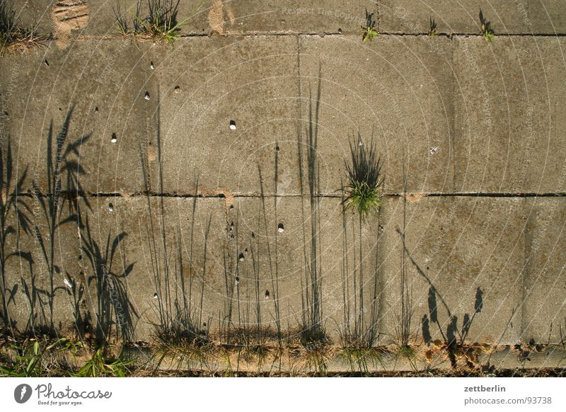 Shadow existence {n} = shadowy existence Edge Sidewalk Plant Grass Concrete Seam Stone Pebble Minerals Obscure Lanes & trails To go for a walk pebbles