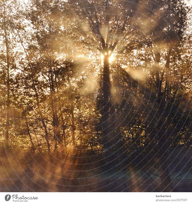 It's a new day Nature Sun Autumn Fog Tree Bushes Lake Illuminate Fantastic Emotions Moody Joie de vivre (Vitality) Beginning Energy Hope Power Calm Senses