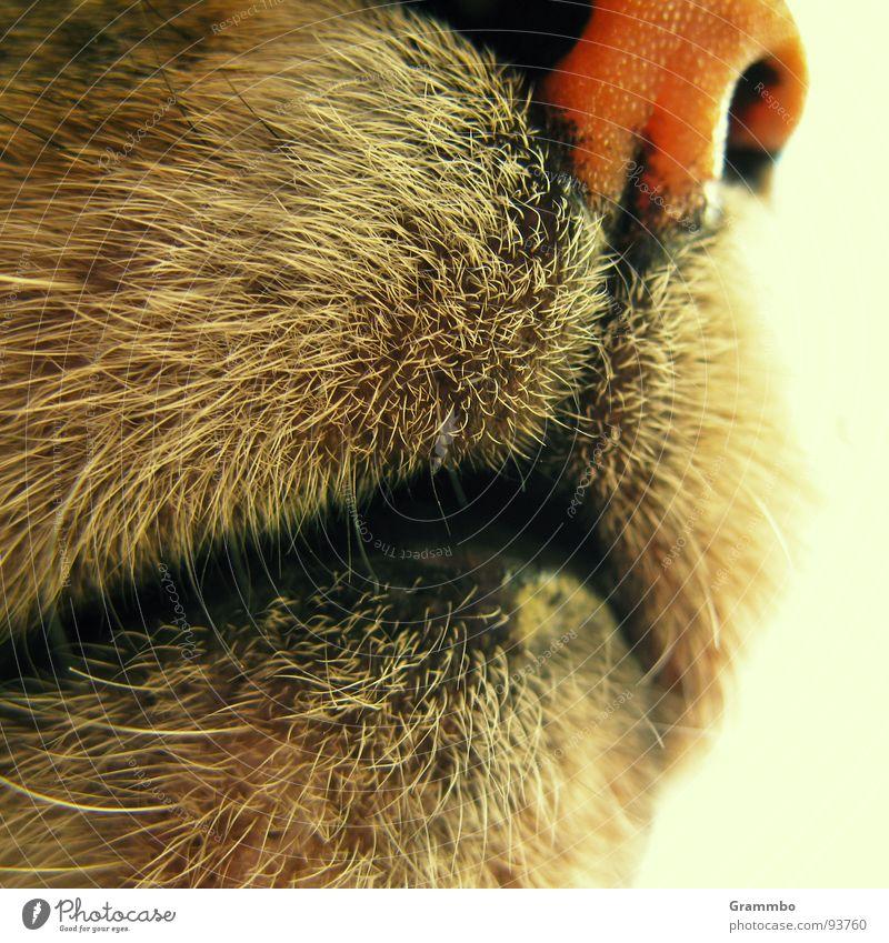 Cat Mouth Nose Pelt Appetite Odor Mammal Assassin Purr Animal Sulk